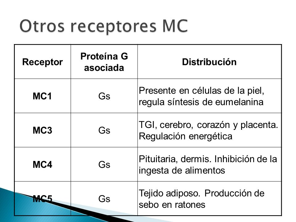 Otros receptores MC Receptor Proteína G asociada Distribución MC1 Gs