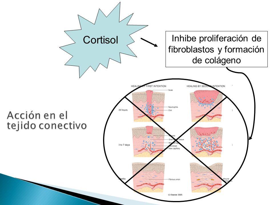 Inhibe proliferación de fibroblastos y formación de colágeno