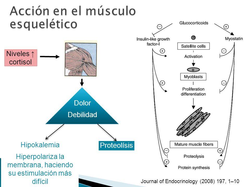 Hiperpolariza la membrana, haciendo su estimulación más difícil