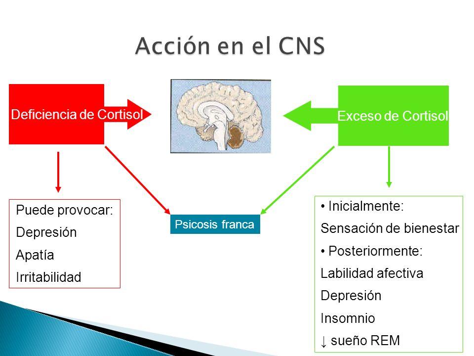 Acción en el CNS Deficiencia de Cortisol Exceso de Cortisol