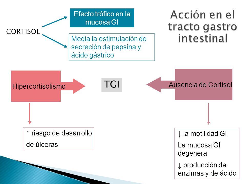 Acción en el tracto gastro intestinal
