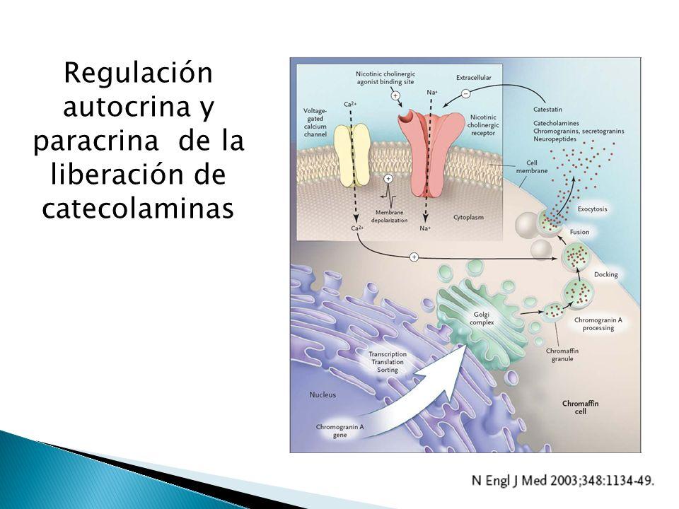 Regulación autocrina y paracrina de la liberación de catecolaminas