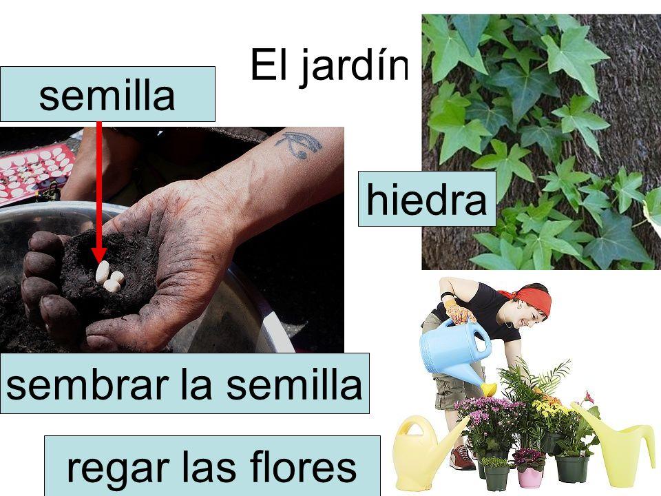 El jardín semilla hiedra sembrar la semilla regar las flores
