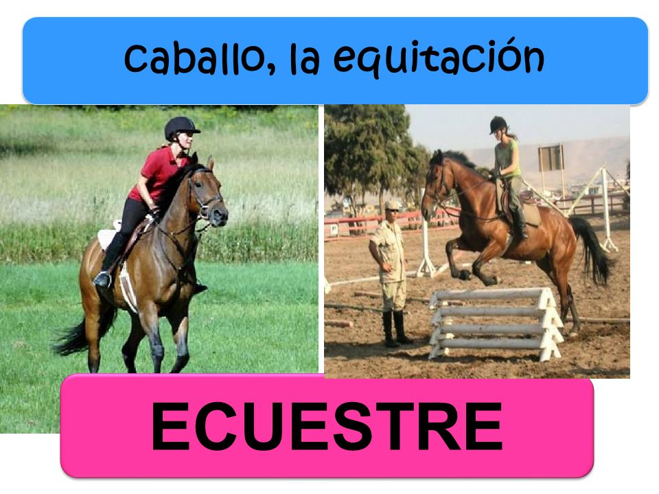 caballo, la equitación ECUESTRE