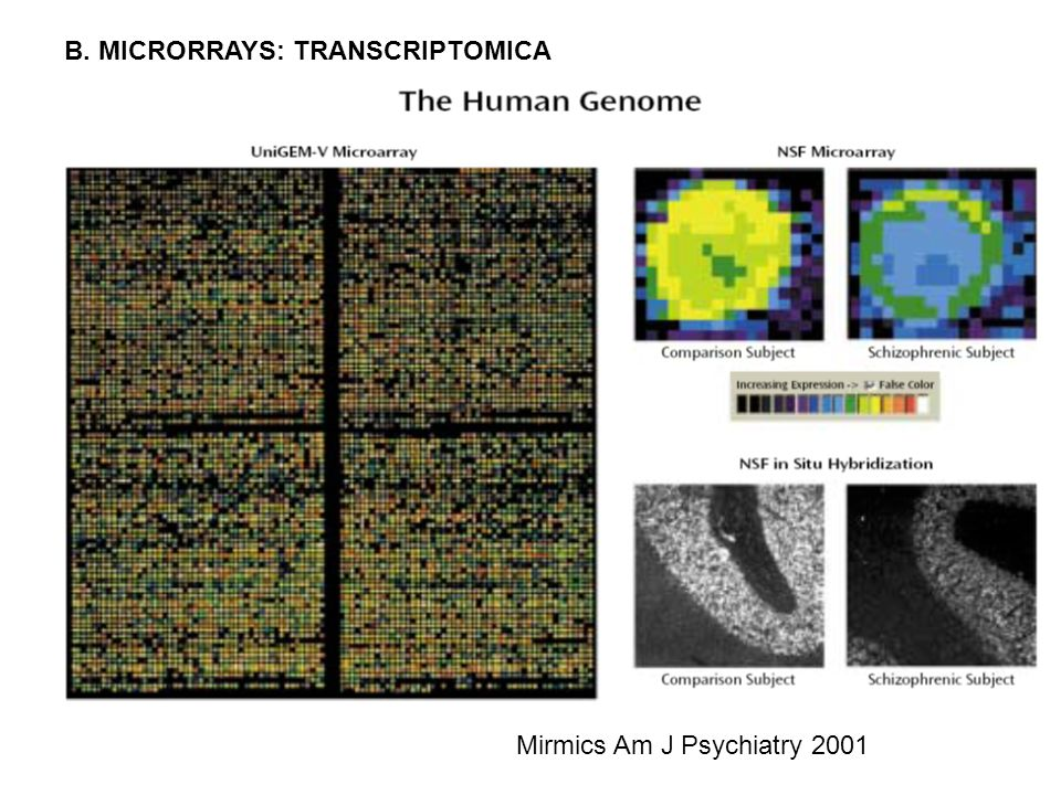 B. MICRORRAYS: TRANSCRIPTOMICA