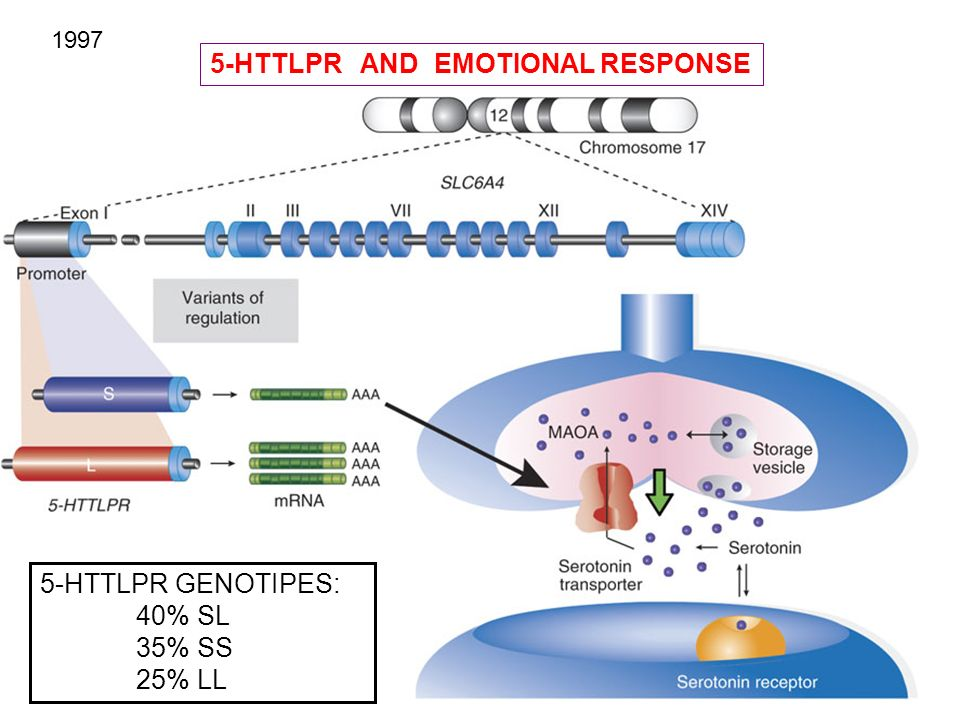 5-HTTLPR AND EMOTIONAL RESPONSE