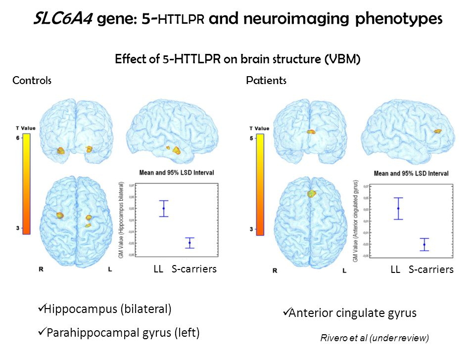 Effect of 5-HTTLPR on brain structure (VBM)