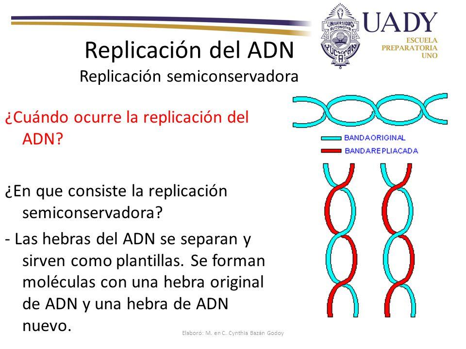 Curso biolog a 1 adn y arn replicaci n y s ntesis de for Que significa molecula