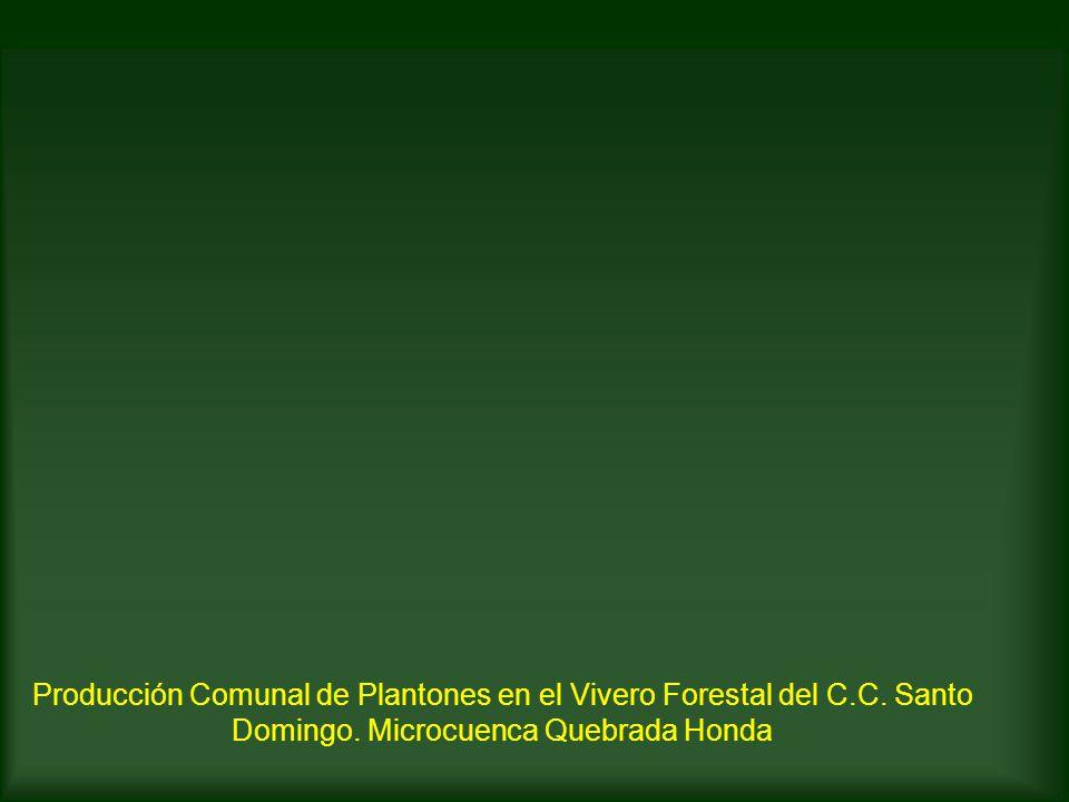 Experiencias de pronamachcs en la regi n amazonas ppt for Manejo de viveros forestales