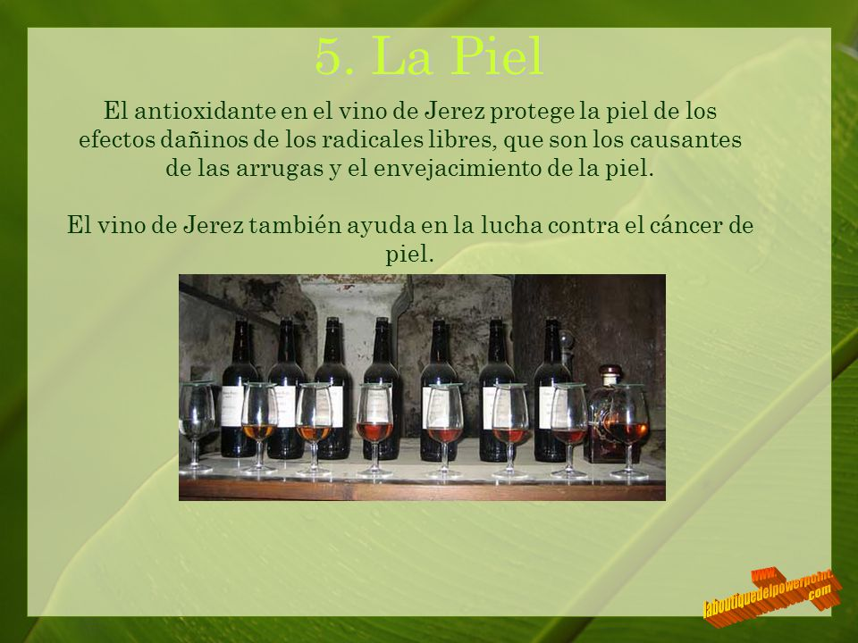 5. La Piel www. laboutiquedelpowerpoint. com