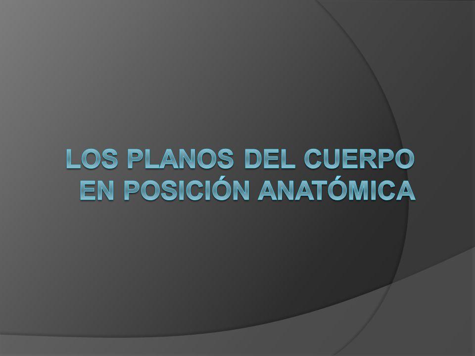LOS PLANOS DEL CUERPO EN POSICIÓN ANATÓMICA