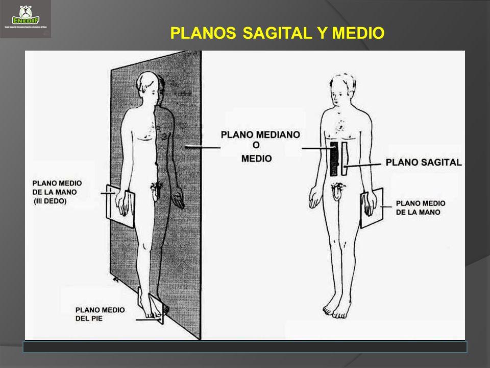 PLANOS SAGITAL Y MEDIO