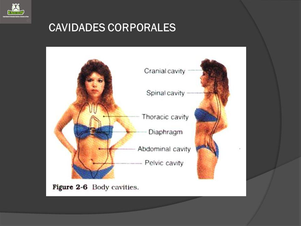CAVIDADES CORPORALES