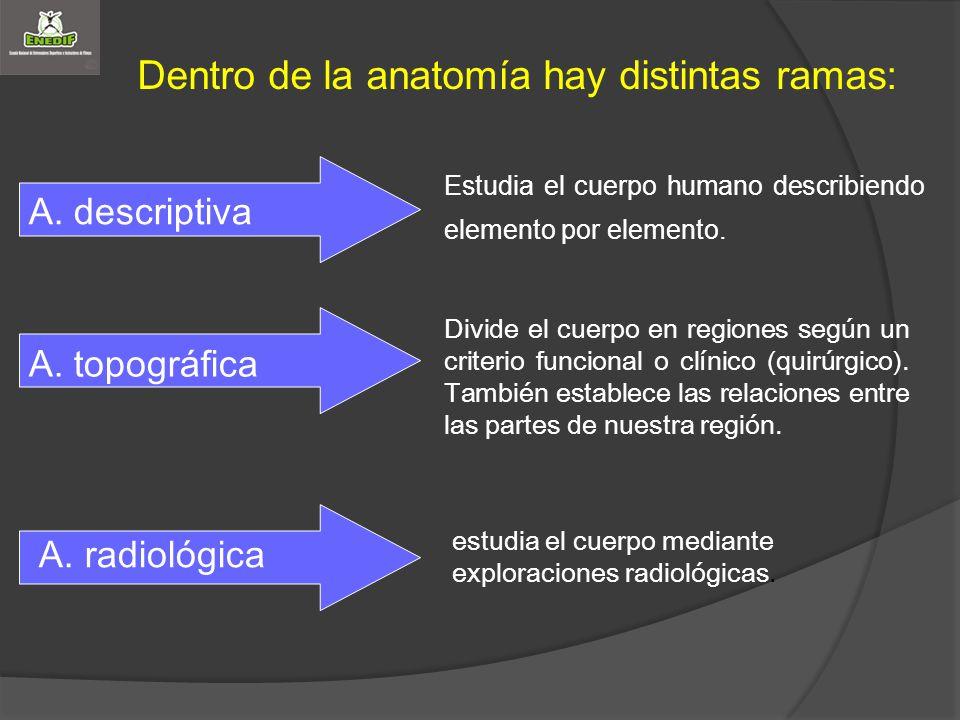 Dentro de la anatomía hay distintas ramas: