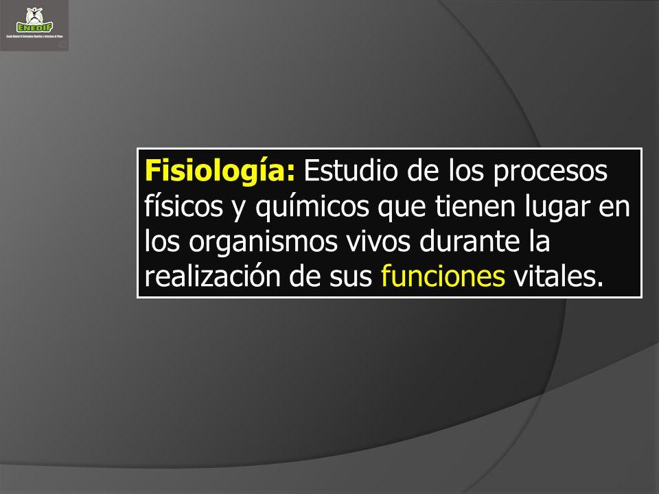 Fisiología: Estudio de los procesos físicos y químicos que tienen lugar en los organismos vivos durante la realización de sus funciones vitales.