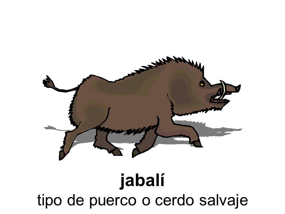 jabalí tipo de puerco o cerdo salvaje