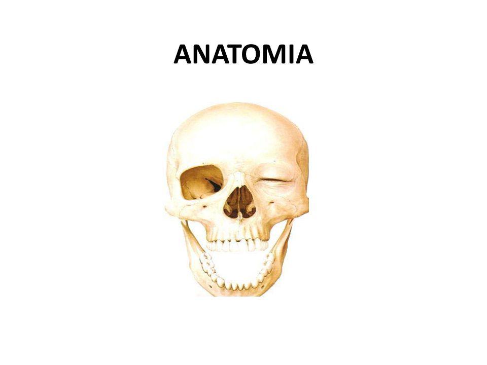 ANATOMIA. - ppt video online descargar