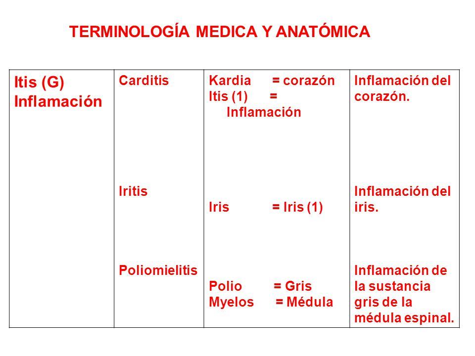 Vistoso Terminología Médica Y Anatomía En Línea Curso Ornamento ...