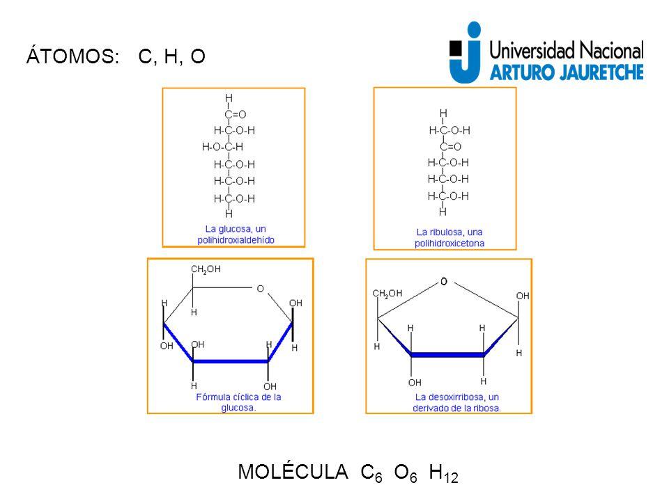 ÁTOMOS: C, H, O MOLÉCULA C6 O6 H12