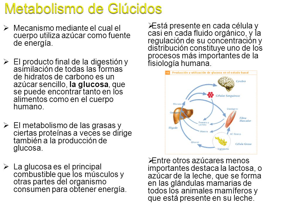 Metabolismo de Glúcidos