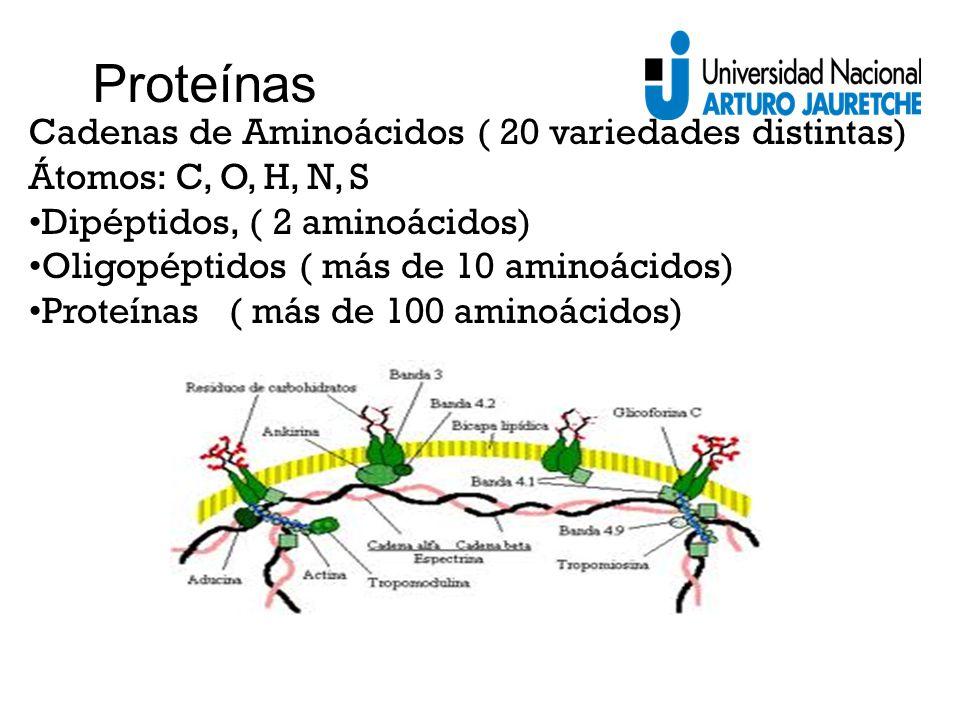 Proteínas Cadenas de Aminoácidos ( 20 variedades distintas)