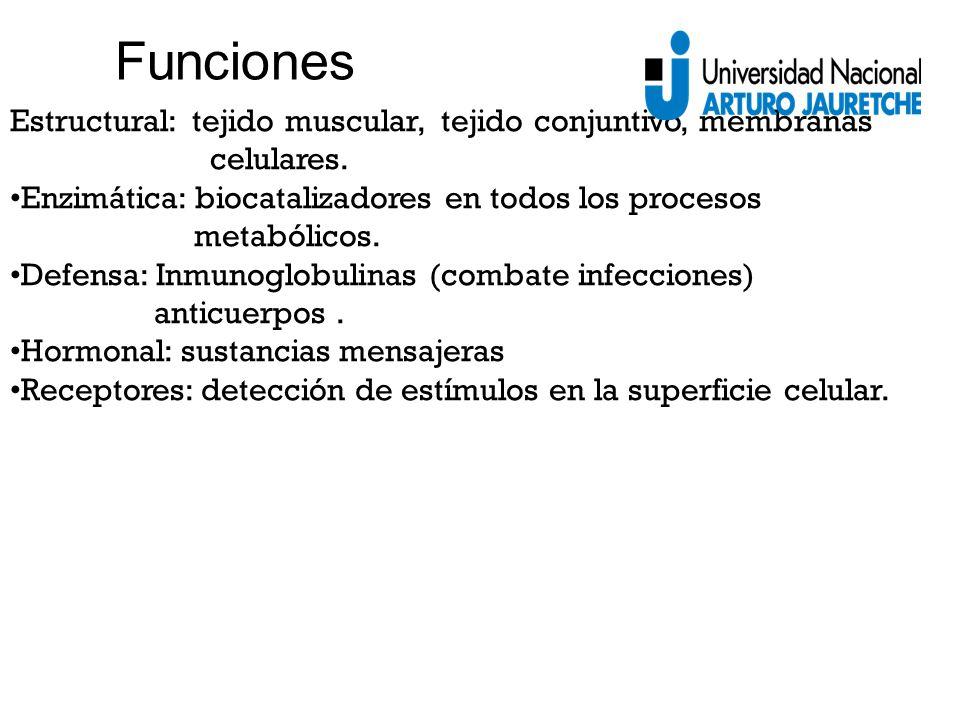Funciones Estructural: tejido muscular, tejido conjuntivo, membranas