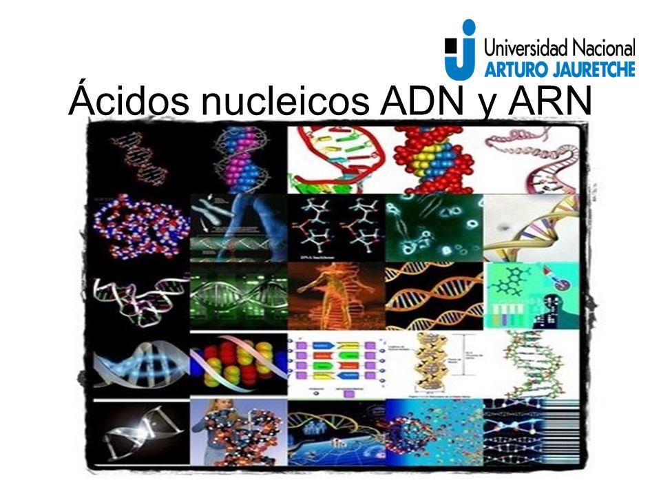 Ácidos nucleicos ADN y ARN
