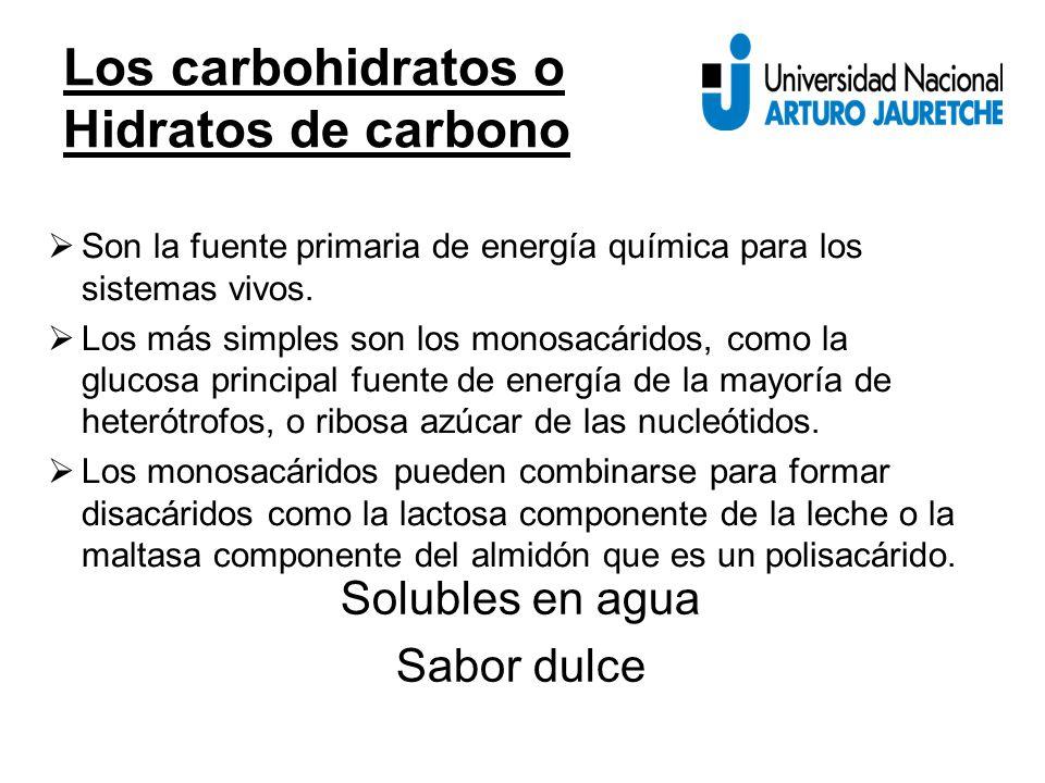 Los carbohidratos o Hidratos de carbono