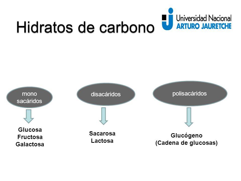 Hidratos de carbono polisacáridos disacáridos mono sacáridos Glucosa