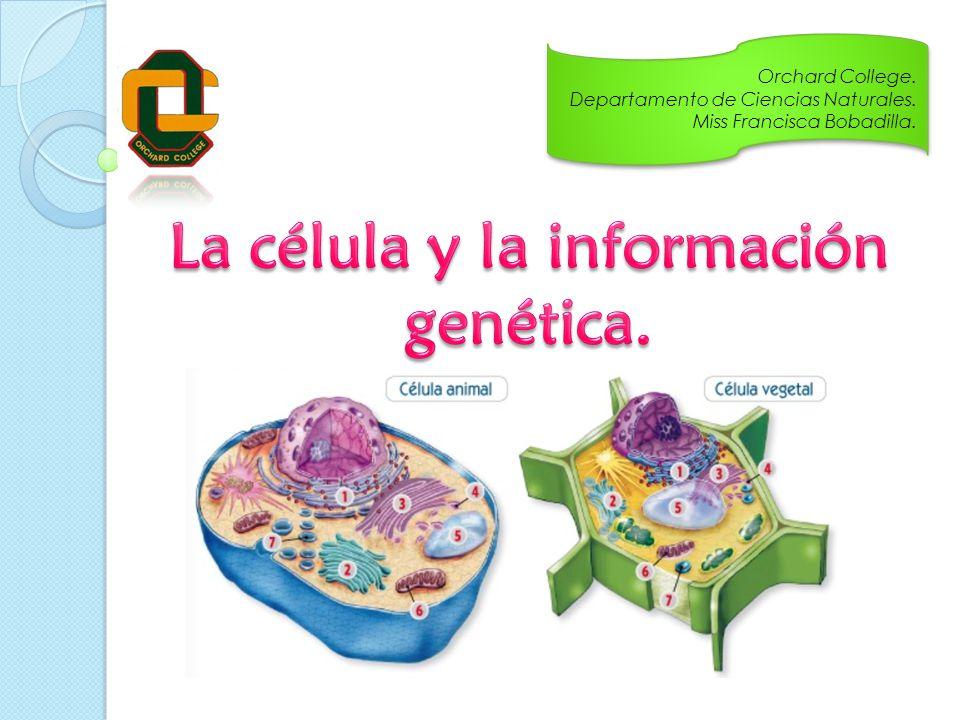 La Célula Y La Información Genética
