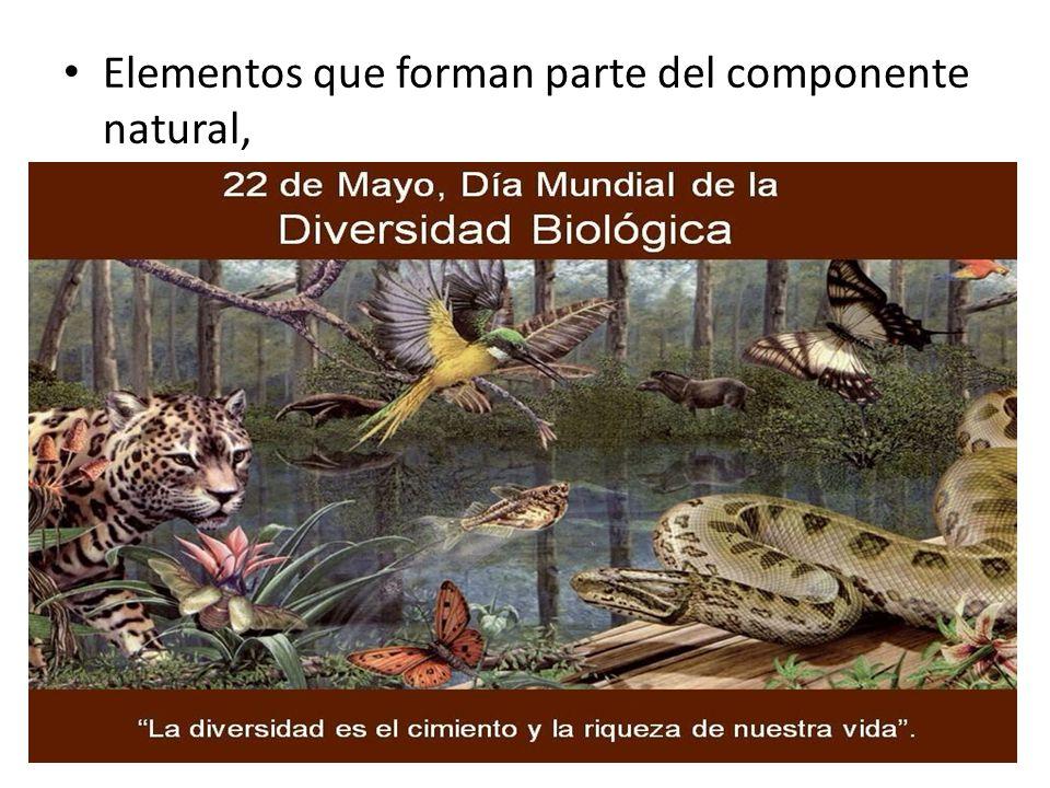 Elementos que forman parte del componente natural,