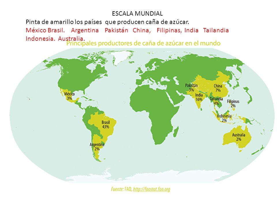 ESCALA MUNDIAL Pinta de amarillo los países que producen caña de azúcar.