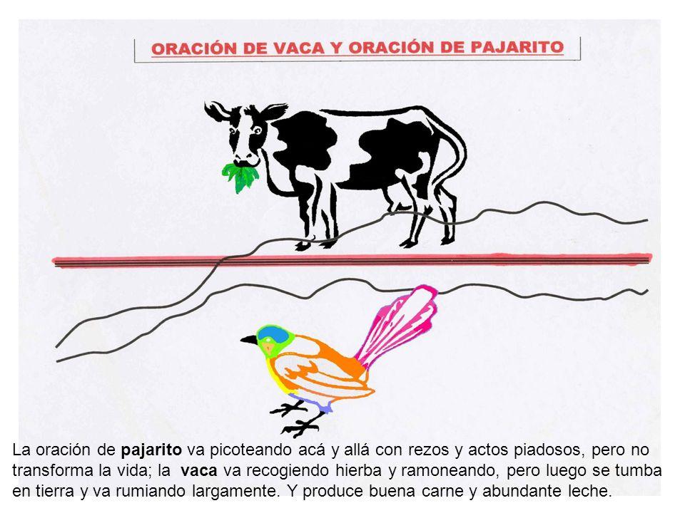 La oración de pajarito va picoteando acá y allá con rezos y actos piadosos, pero no transforma la vida; la vaca va recogiendo hierba y ramoneando, pero luego se tumba en tierra y va rumiando largamente.