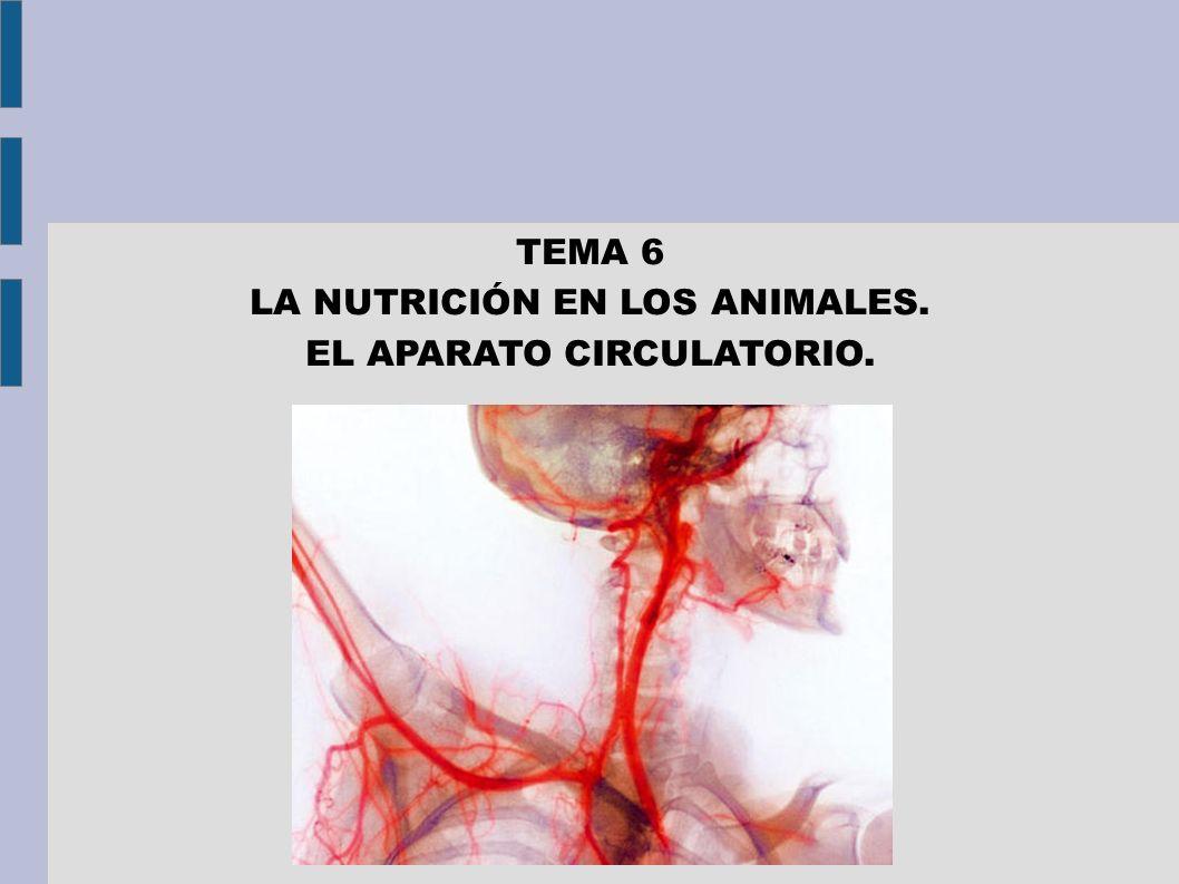 LA NUTRICIÓN EN LOS ANIMALES. EL APARATO CIRCULATORIO.