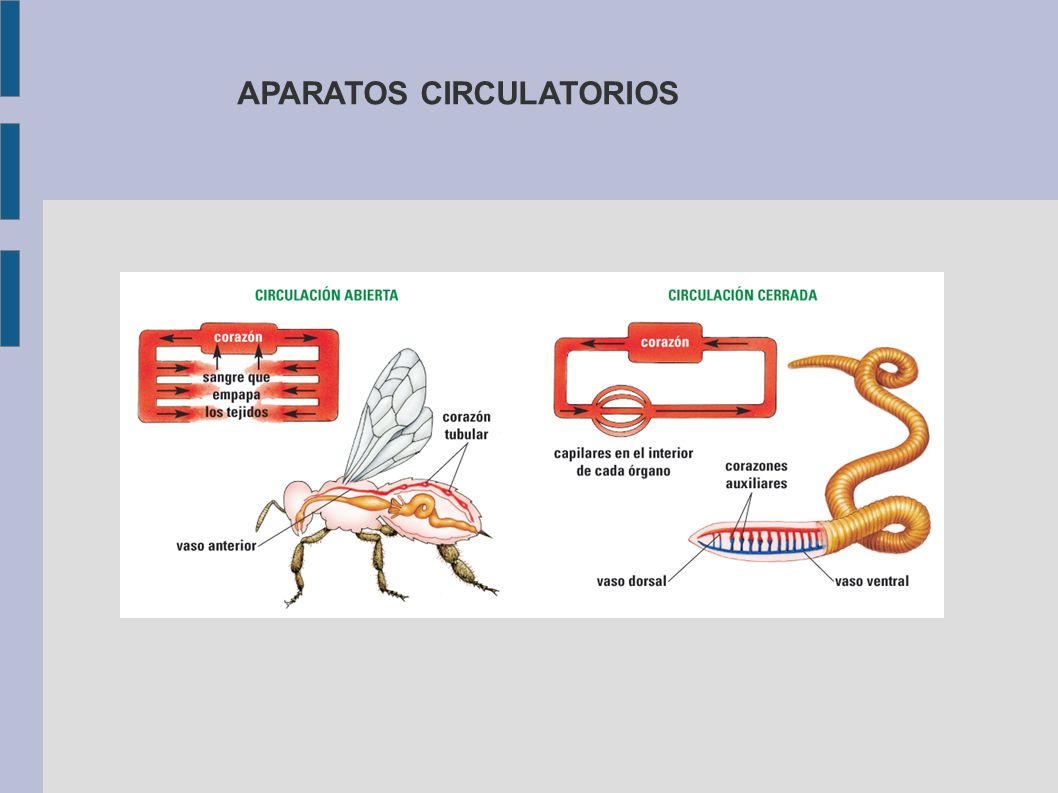 APARATOS CIRCULATORIOS
