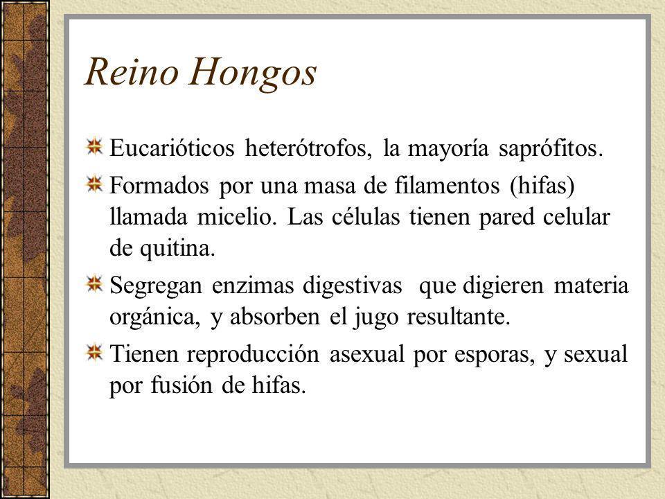 Reino Hongos Eucarióticos heterótrofos, la mayoría saprófitos.