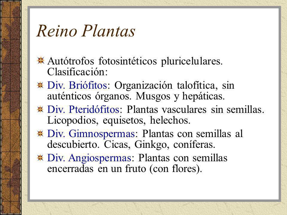Reino Plantas Autótrofos fotosintéticos pluricelulares. Clasificación: