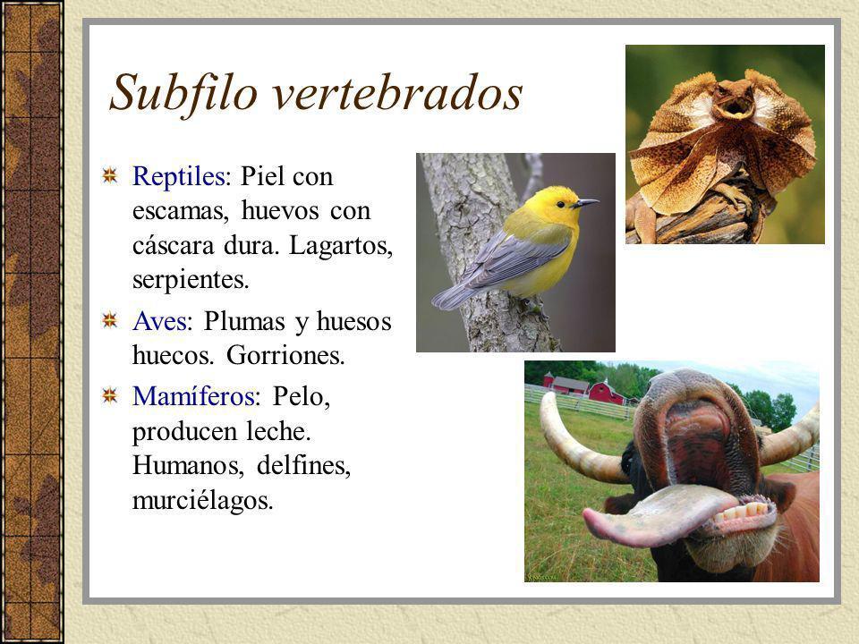 Subfilo vertebrados Reptiles: Piel con escamas, huevos con cáscara dura. Lagartos, serpientes. Aves: Plumas y huesos huecos. Gorriones.