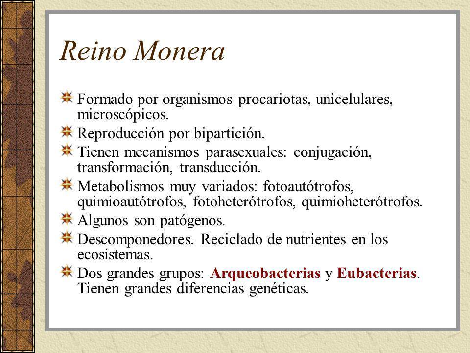 Reino MoneraFormado por organismos procariotas, unicelulares, microscópicos. Reproducción por bipartición.