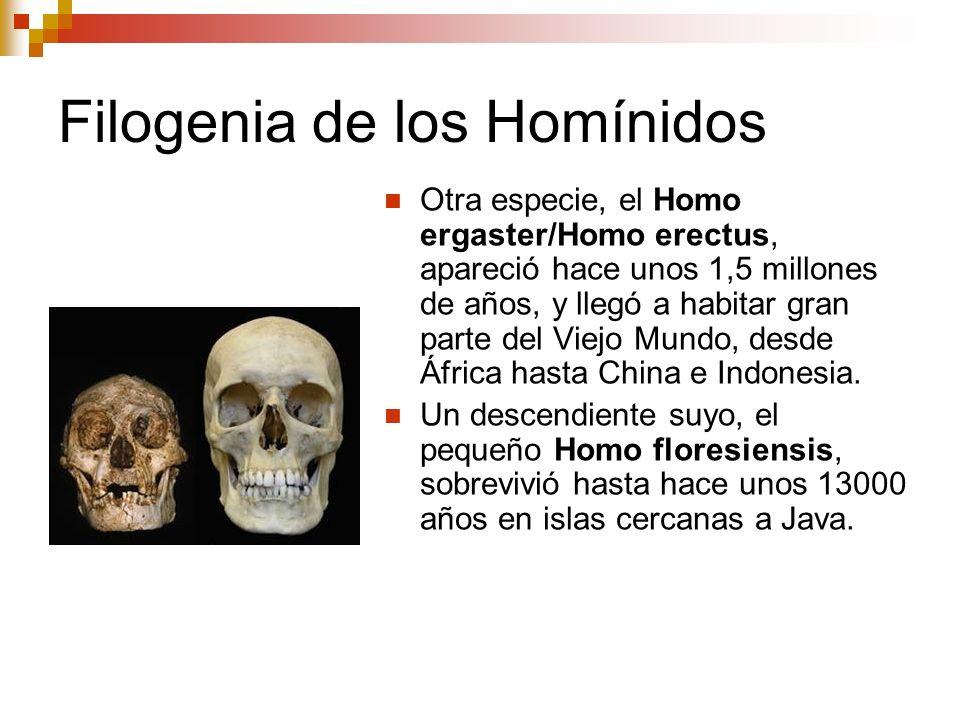 Filogenia de los Homínidos