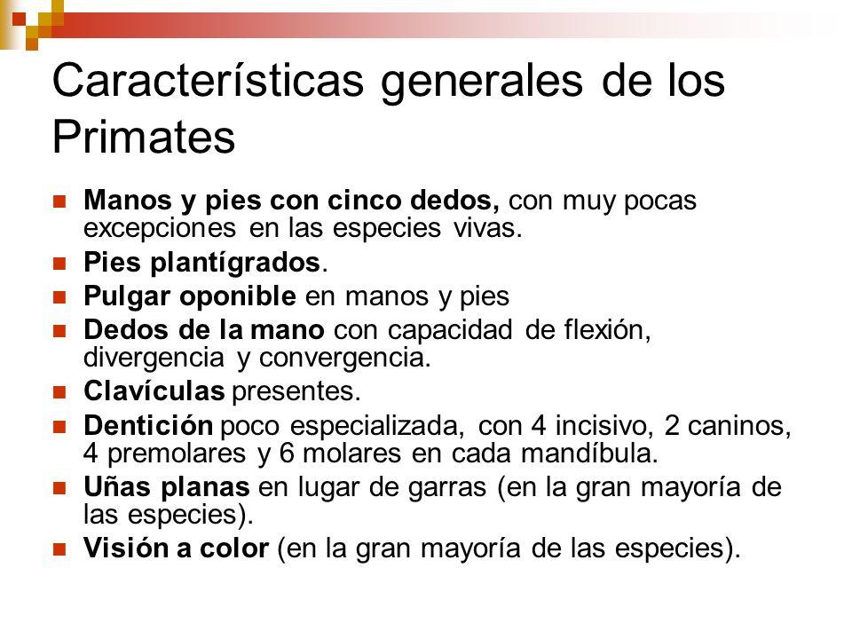 Características generales de los Primates