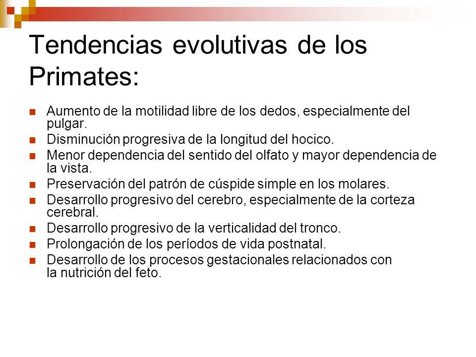 Tendencias evolutivas de los Primates: