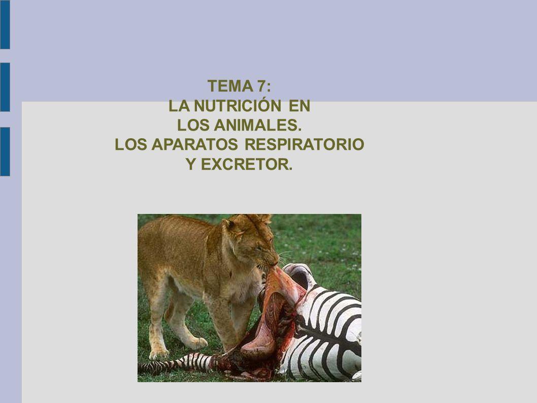 TEMA 7: LA NUTRICIÓN EN LOS ANIMALES
