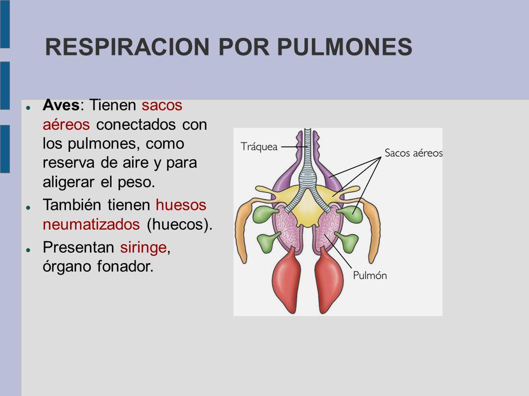 RESPIRACION POR PULMONES