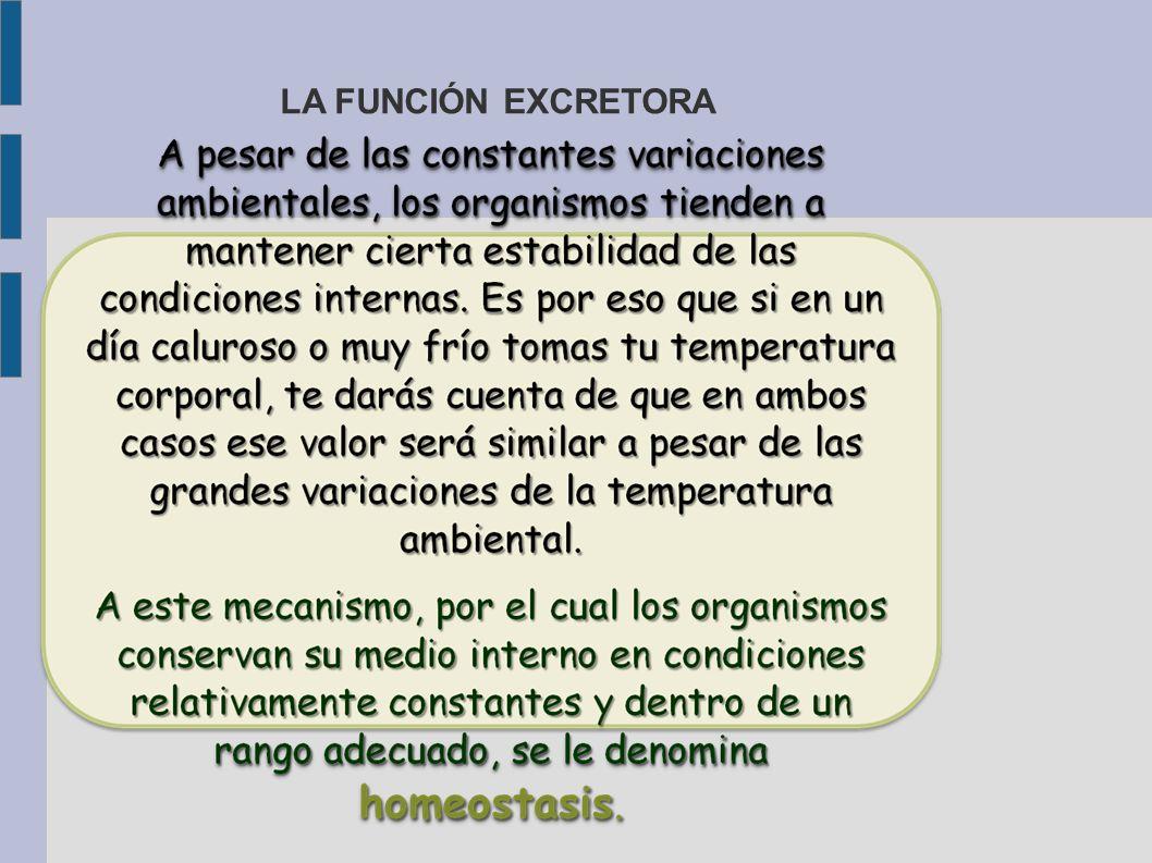 LA FUNCIÓN EXCRETORA 17