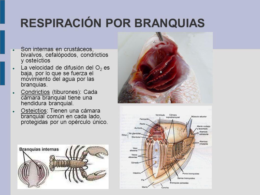 RESPIRACIÓN POR BRANQUIAS