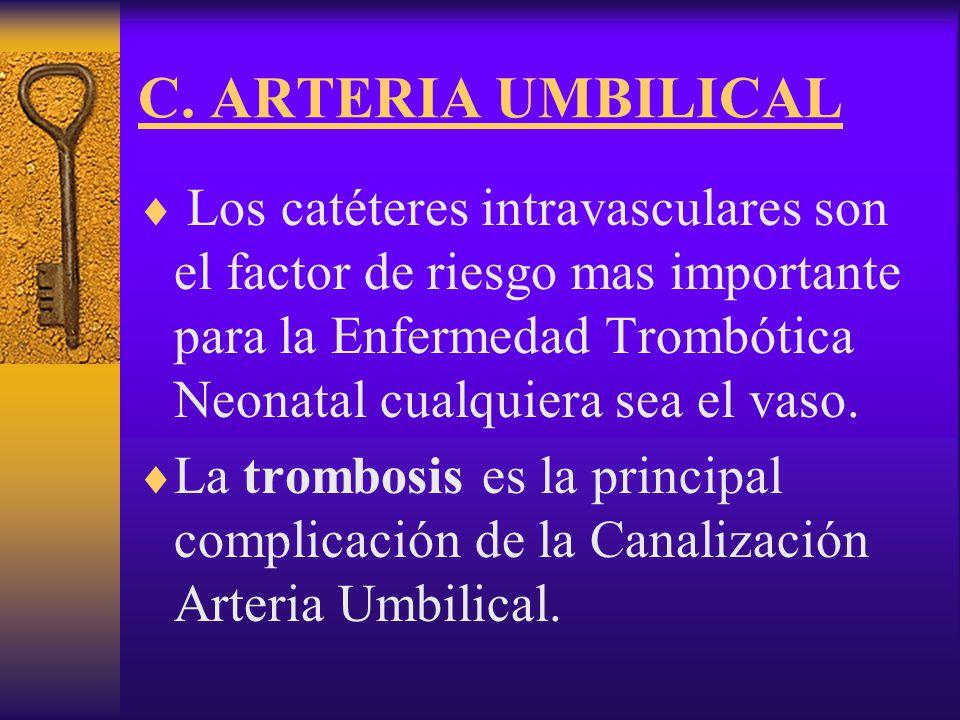 C. ARTERIA UMBILICAL
