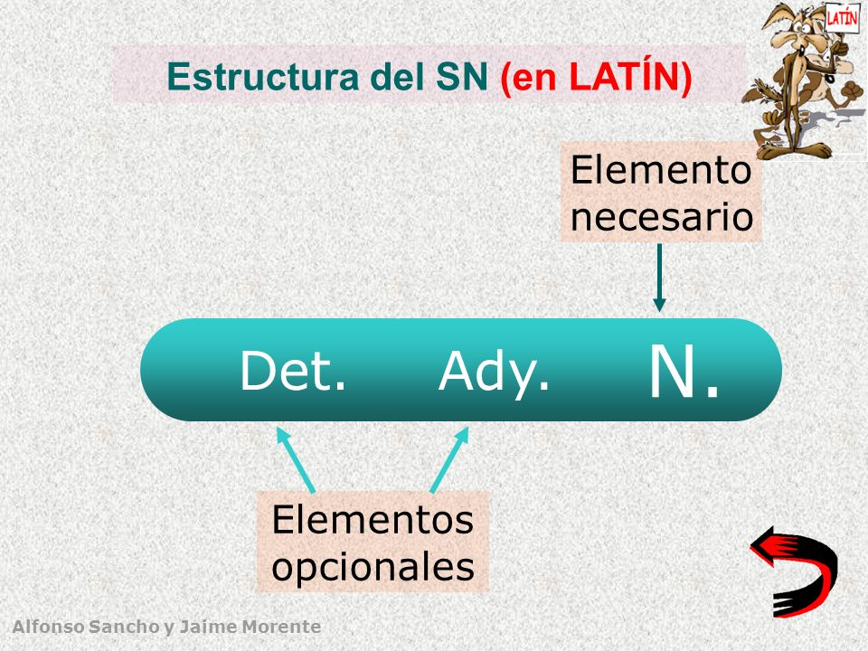 Estructura del SN (en LATÍN)