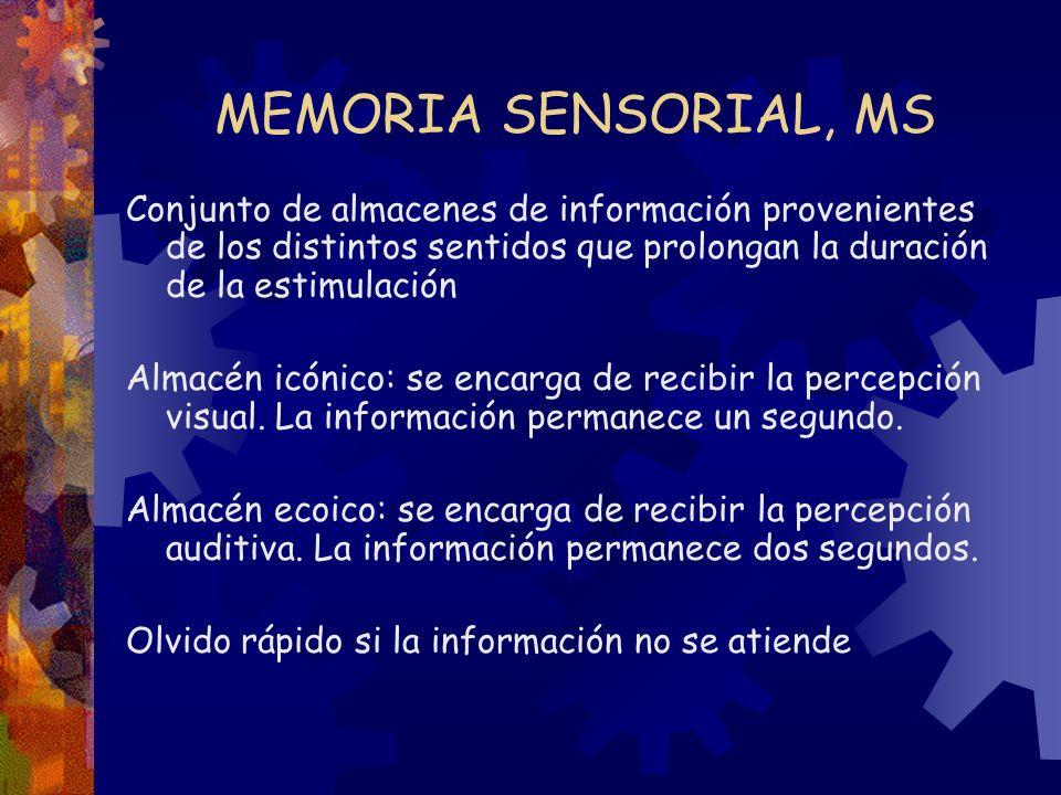 MEMORIA SENSORIAL, MS Conjunto de almacenes de información provenientes de los distintos sentidos que prolongan la duración de la estimulación.