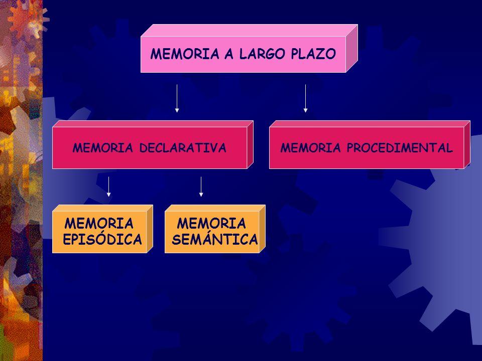 MEMORIA PROCEDIMENTAL